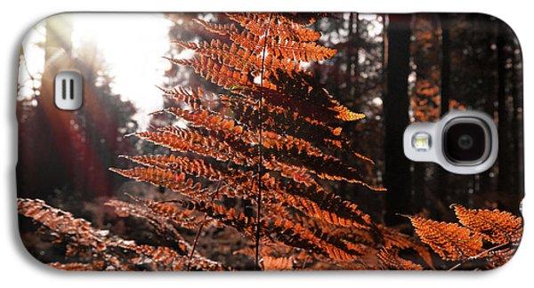 Autumnal Evening Galaxy S4 Case