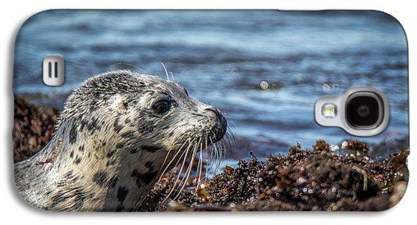 Baby Seal Galaxy S4 Case