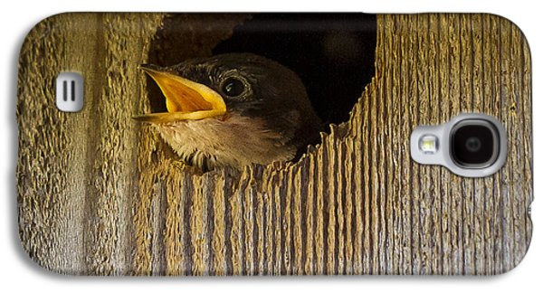 Baby Swallows First Impression Galaxy S4 Case