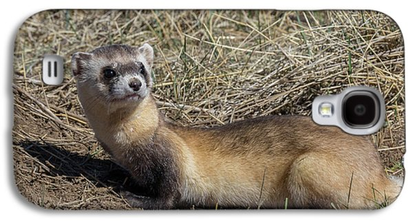Back-footed Ferret Keeps Watch Galaxy S4 Case by Tony Hake