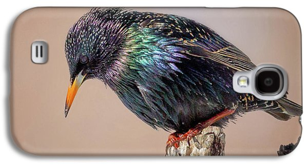 Backyard Birds European Starling Square Galaxy S4 Case by Bill Wakeley