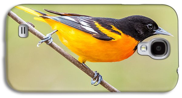 Baltimore Oriole Galaxy S4 Case by Paul Freidlund