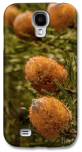 Galaxy S4 Case featuring the photograph Banksia by Werner Padarin