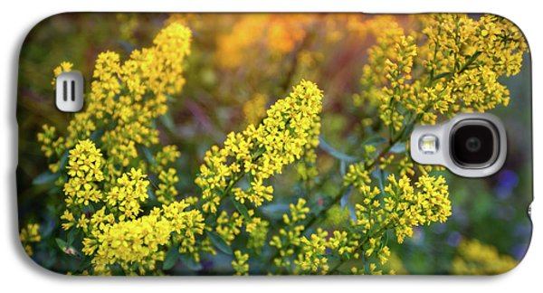 Barbarea Vulgaris - Yellow Rocket  Garden Flower Galaxy S4 Case