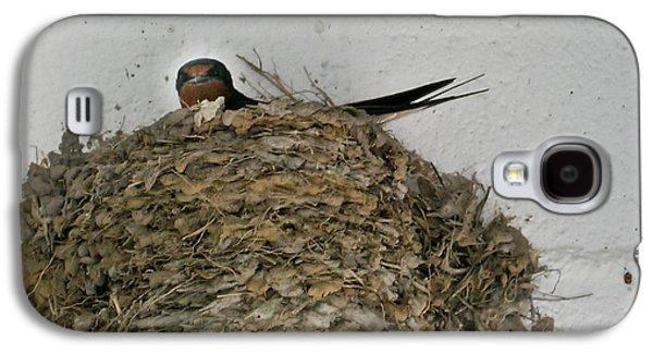 Barn Swallow Hirundo Rustica Galaxy S4 Case by Douglas Barnett