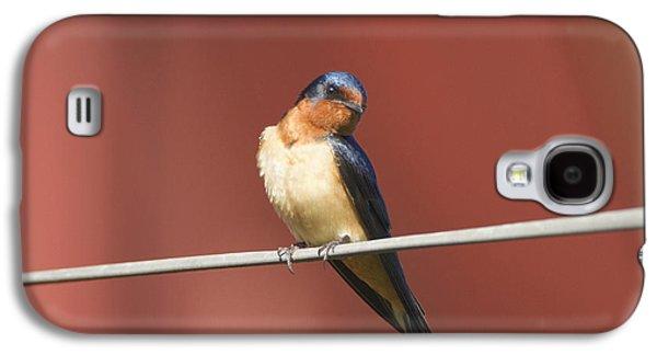 Barn Swallow Galaxy S4 Case by Marie Read