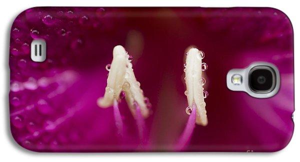 Bauhinia Blakeana Hawaiian Orchid Tree Floral Macro Galaxy S4 Case by Sharon Mau