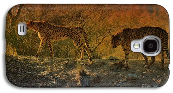 Beautiful Big Cats Of The Living Desert Galaxy S4 Case by Sherri's Of Palm Springs