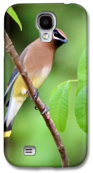 Beautiful Cedar Wax Wing  Galaxy S4 Case by Sheri McLeroy