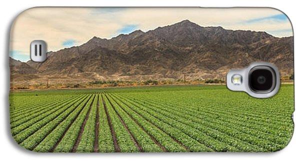 Beautiful Lettuce Field Galaxy S4 Case
