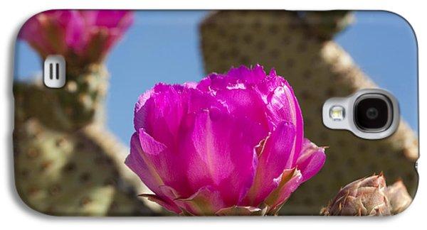 Beavertail Cactus Blossom 2 Galaxy S4 Case