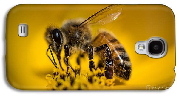 Bee Enjoys Collecting Pollen From Yellow Coreopsis Galaxy S4 Case