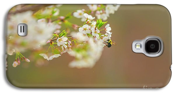 Bee On A Cherry Blossom Galaxy S4 Case