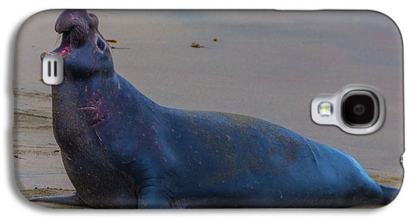 Bellowing Bull Elephant Seal Galaxy S4 Case
