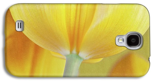 Beneath The Yellow Tulip Galaxy S4 Case by Tom Mc Nemar