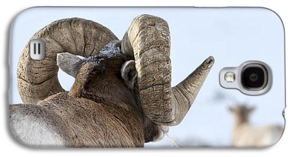 Big Horn Rams Galaxy S4 Case