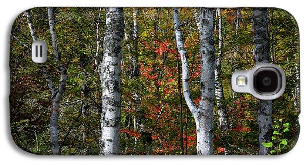 Birches Galaxy S4 Case by Elena Elisseeva