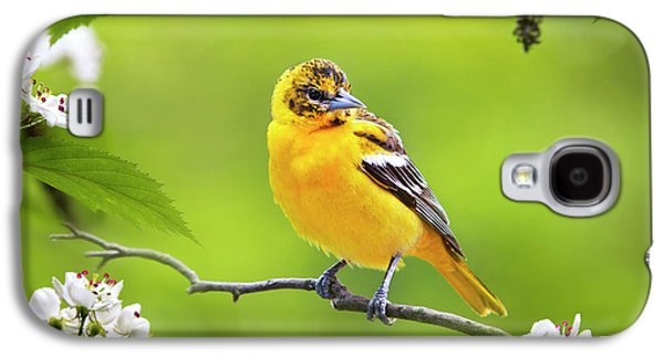Bird And Blooms - Baltimore Oriole Galaxy S4 Case