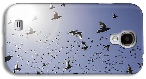Birds Galaxy S4 Case