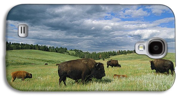 Bison And Their Calves Graze In Custer Galaxy S4 Case