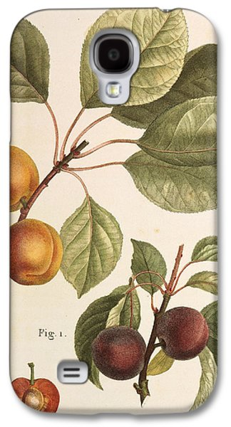 Black Apricot And Apricot Plants Galaxy S4 Case