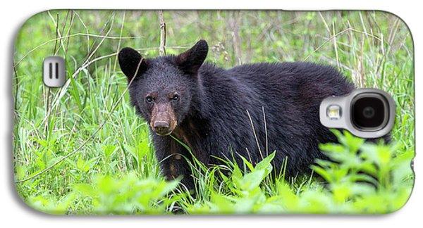 Black Bear In The Wild Galaxy S4 Case