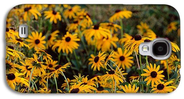 Black-eyed Susan Rudbeckia Hirta Galaxy S4 Case by Panoramic Images