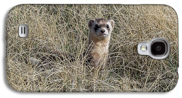 Black-footed Ferret Checks Out Its Surroundings Galaxy S4 Case by Tony Hake