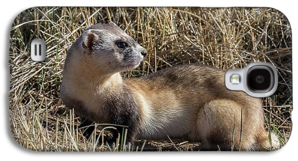 Black-footed Ferret Keeps Watch Galaxy S4 Case by Tony Hake