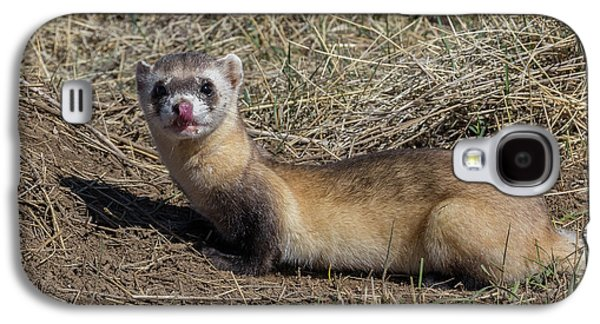 Black-footed Ferret Licks Its Chops Galaxy S4 Case by Tony Hake