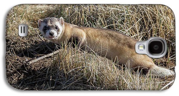 Black-footed Ferret On The Prowl Galaxy S4 Case by Tony Hake