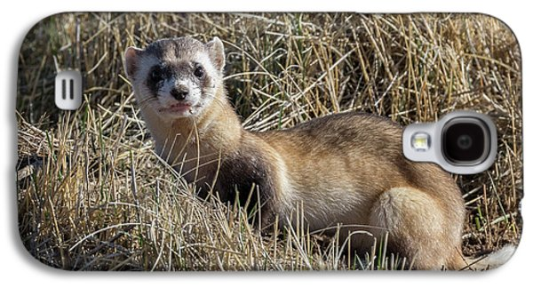 Black-footed Ferret Poses Galaxy S4 Case by Tony Hake
