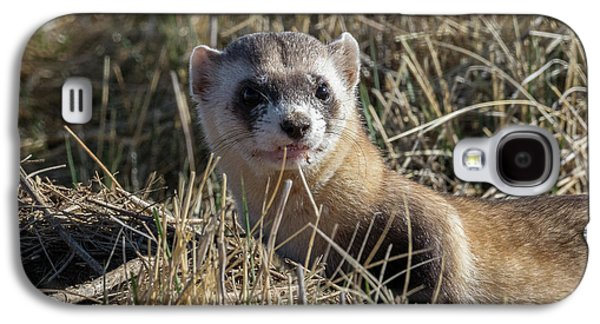 Black-footed Ferret Up Close Galaxy S4 Case by Tony Hake