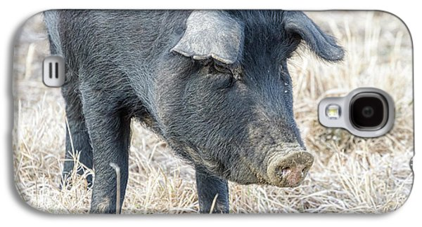 Galaxy S4 Case featuring the photograph Black Pig Close-up by James BO Insogna