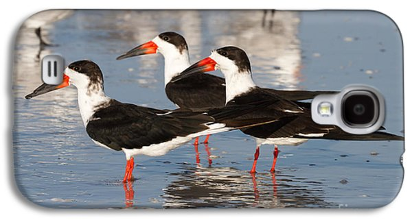 Black Skimmer Birds Galaxy S4 Case