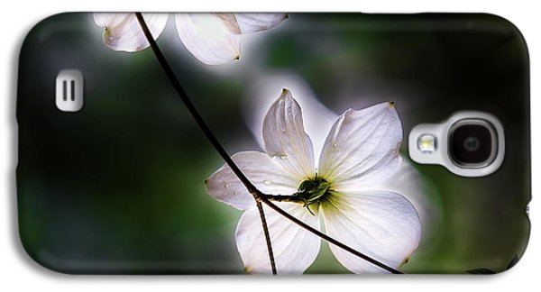 Blooming Dogwoods In Yosemite 2 Galaxy S4 Case