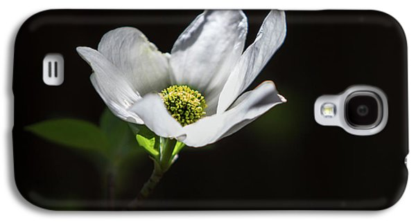 Blooming Dogwoods In Yosemite 3 Galaxy S4 Case