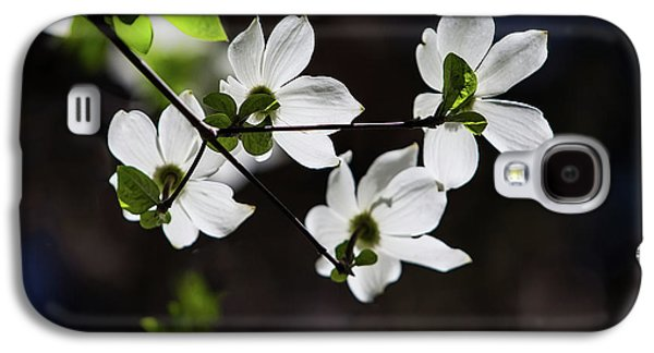 Blooming Dogwoods In Yosemite 4 Galaxy S4 Case
