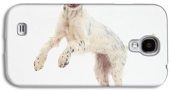 Blue Belton English Setter Galaxy S4 Case by Mark Taylor