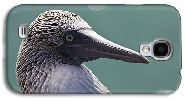 Blue Footed Booby II Galaxy S4 Case by Dave Fleetham