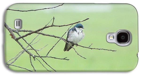 Blue Headed Bird Galaxy S4 Case