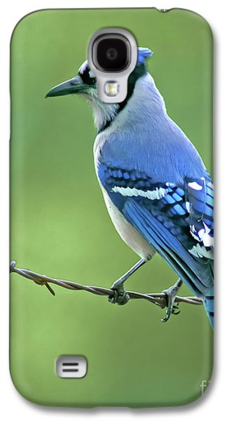 Blue Jay On The Fence Galaxy S4 Case
