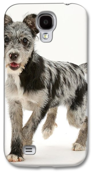 Blue Merle Mutt Galaxy S4 Case