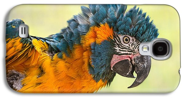 Blue Throated Macaw Galaxy S4 Case