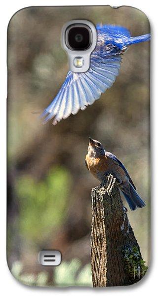 Bluebird Buzz Galaxy S4 Case by Mike Dawson
