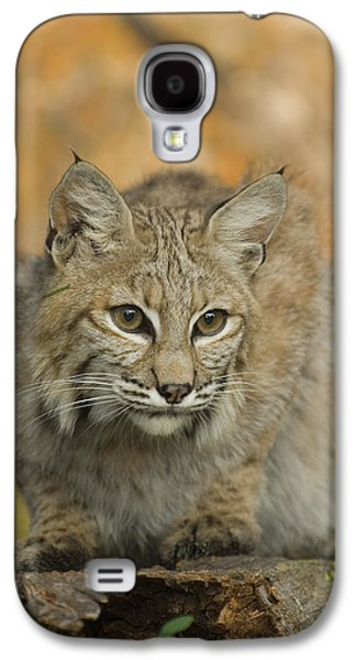 Bobcat Felis Rufus Galaxy S4 Case by Grambo Photography and Design Inc.