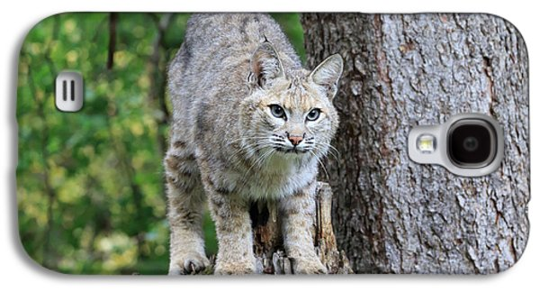 Bobcat Galaxy S4 Case by Louise Heusinkveld