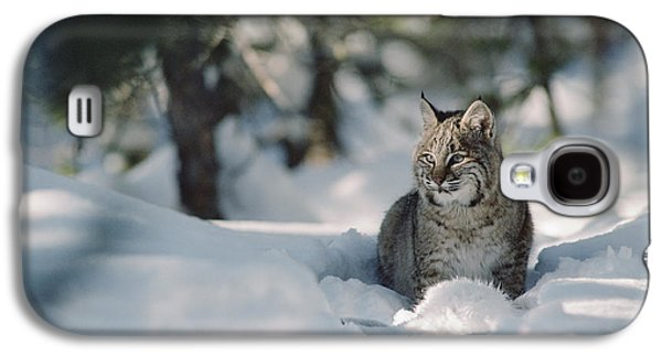 Bobcat Lynx Rufus Adult Resting In Snow Galaxy S4 Case by Michael Quinton