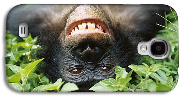 Bonobo Pan Paniscus Smiling Galaxy S4 Case