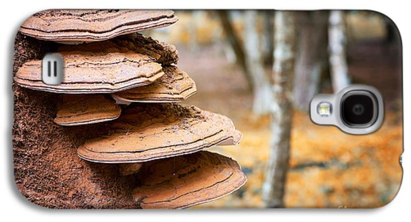 Bracket Fungus On Beech Tree Galaxy S4 Case by Jane Rix